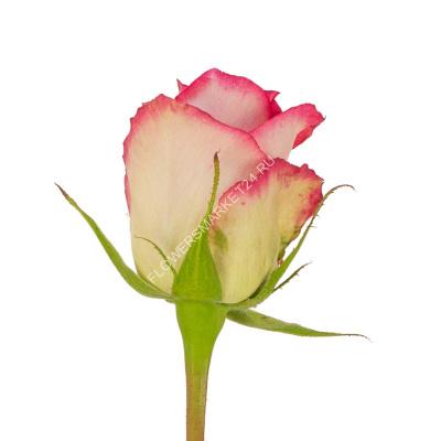 Купить розы поштучно
